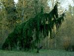 Cora Piantoni<br/>In Gesellschaft von Bäumen