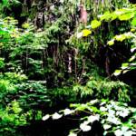 Heike Döscher: Der Wald